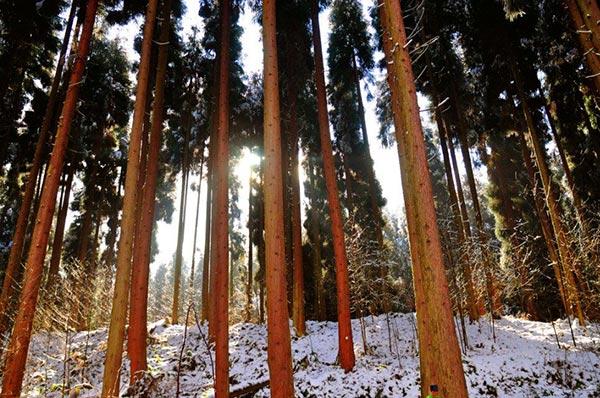 四川冬季必去景点盘点