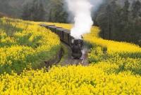 寻找最美春天嘉阳乘坐蒸汽小火车、油菜花1日游