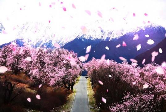 林芝桃花节最佳赏花地点以及赏花路线详细解析
