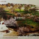 跟着爱客发现西藏:觉龙桃花村