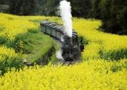 【犍为嘉阳小火车1日游】穿过时间的隧道 感受世纪文明记忆---乐山嘉阳小火车