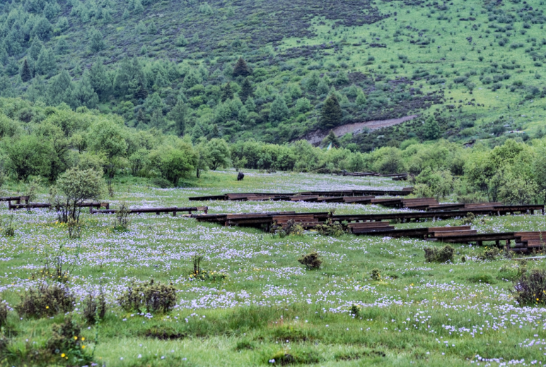 【鹧鸪山休闲露营2日游】行走于高山草甸之间  尽享五彩斑斓生态世界