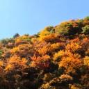 四川哪个地方红叶最漂亮?