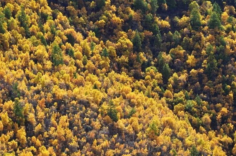 秋天的鲁朗林海