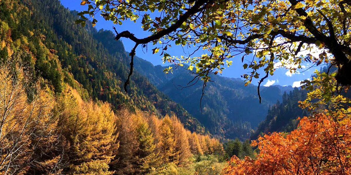 斑斓秋意  黑水奶子沟 红叶彩林 休闲定制游体验