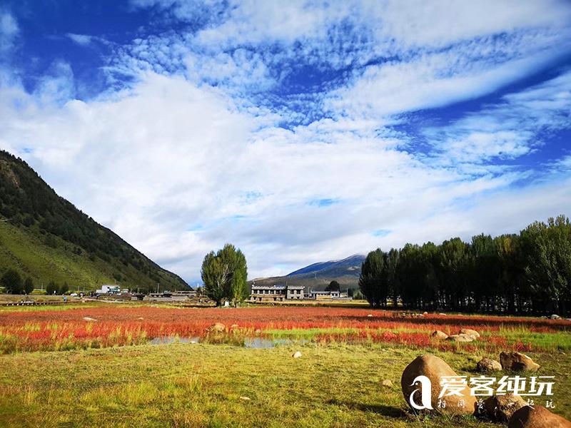 桑堆红草地-(6)
