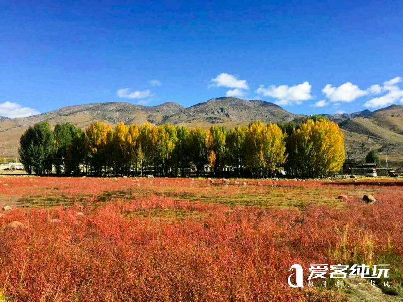 桑堆红草地 (1)