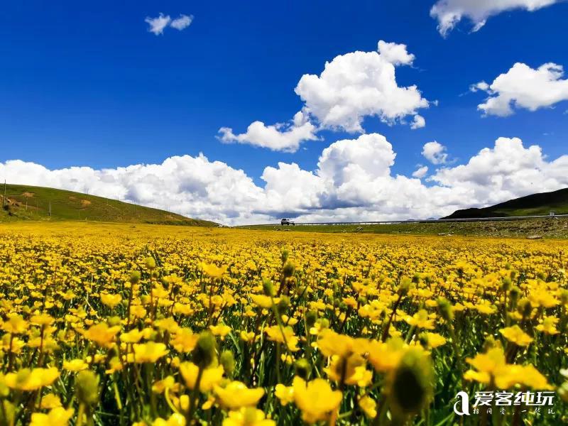 川藏线毛垭草原