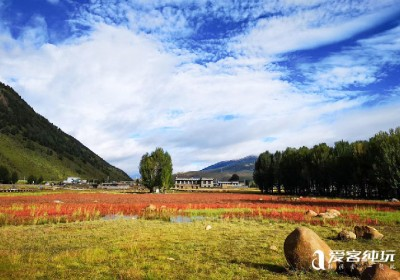 稻城桑堆红草地几月最美?