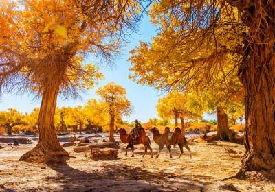 国庆去额济纳旗旅游怎么样,景色如何?哪些景点必去?