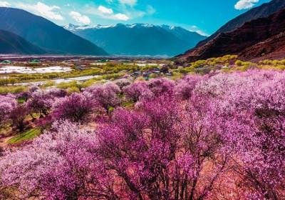 2020年西藏林芝桃花节行程线路安排