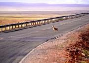 【纵横西部】川进青出16天·不走回头路·摄影包车游·海螺沟-新都桥-稻城亚丁-然乌湖-米堆冰川-林芝-拉萨-羊湖-纳木错-可可西里-茶卡盐湖-青海湖-西宁