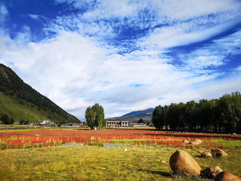 桑堆红草地 (6)