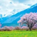 春季川藏线自驾游攻略
