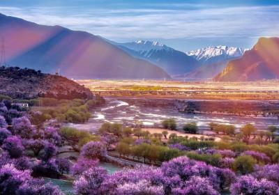 林芝看桃花最美的地方是哪里?