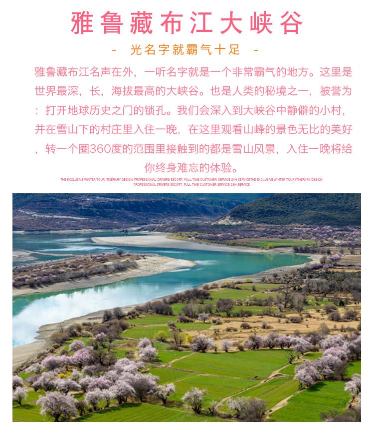 2021西藏桃花节 (15)