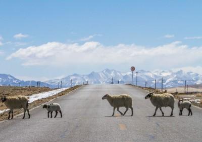 走新藏线几月份是最佳时间?