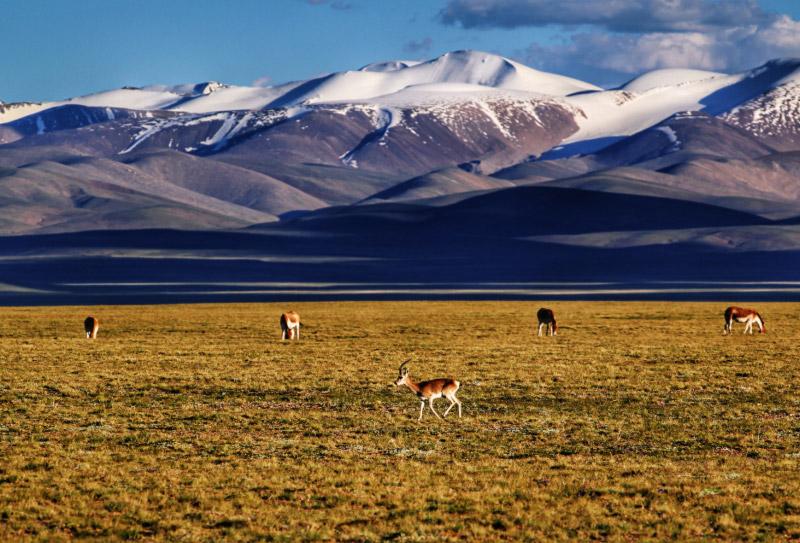 青藏线旅游路线