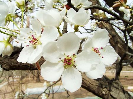 成都周边三月赏花去哪?