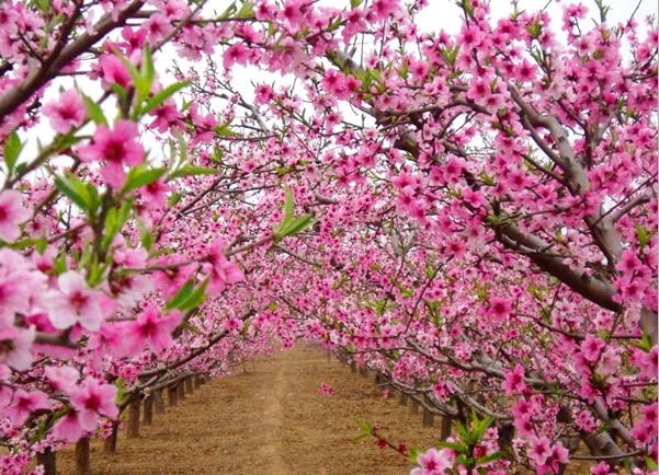 成都周边三月赏花去哪