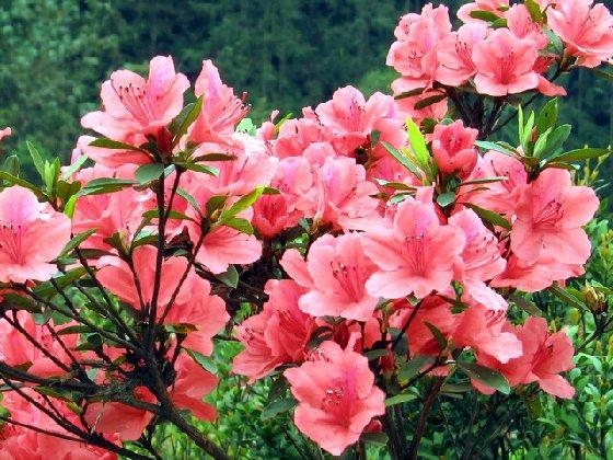 五一峨眉山旅游赏花