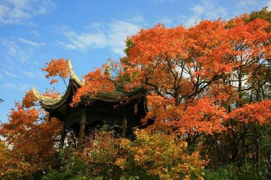 成都周边秋季一日游