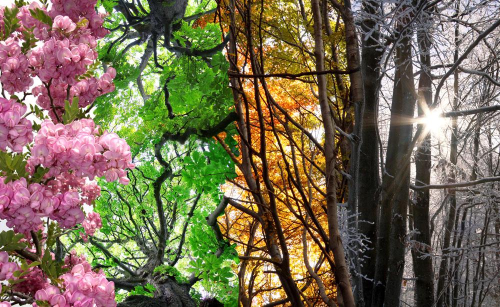 四川四季风景