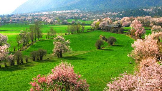 林芝桃花节期间 那些不可错过的赏花景点