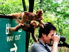 峨眉山调皮的猴子
