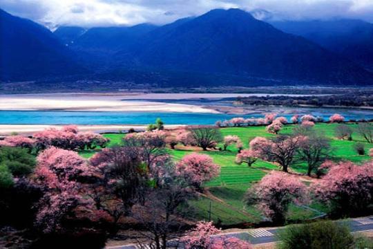 川藏线上别样春天 --- 林芝桃花