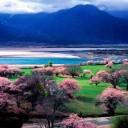 川藏线上别样春天——林芝桃花