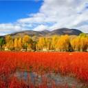 秋季去看赤黄相接的稻城亚丁