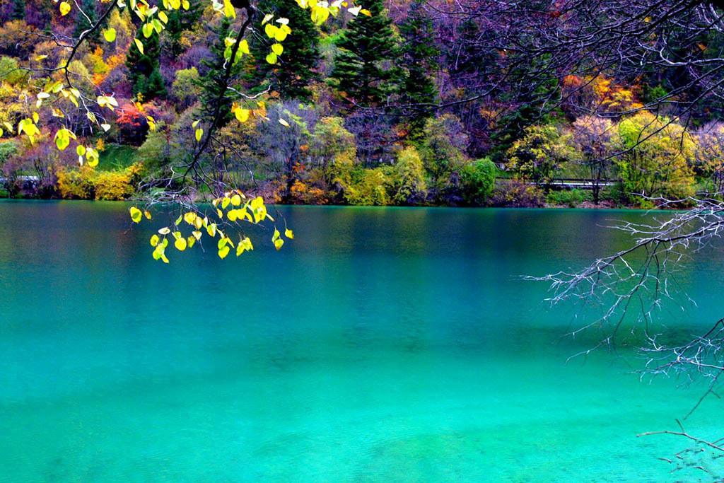 那是一个半沼泽形态的湖泊,海上芦苇丛生,一条蜿蜒青绿的小溪流从芦苇丛中穿过,宛若系在少妇发间的青绿色丝带,一阵微风吹来,芦苇和水波一起随风荡起波澜,好一派生动的景象。特别是在晴朗的天气,清流芦苇都呈现碧绿色,远远望去,满眼碧绿,顿时让人心旷神怡。 九寨沟总共有一百多个海子,每个海子都各具特色。唯一的遗憾是,这次的旅程时间安排较为紧凑,所以没有机会领略每个海子,不过不久的将来,我想我依然会重返九寨沟,重温那不忍触摸的美丽。九寨沟纯玩团最适合游览九寨沟。 文章来源: http://jzg.