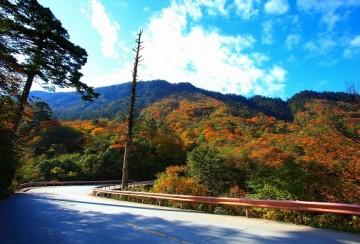 秋季峨眉山红叶之旅 雾中红叶醉朦胧