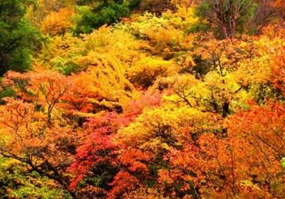 四川看红叶去哪里合适?