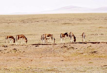 青藏线就应该这么玩  爱客川藏自驾团5.26期 青藏线沿途风光实拍(三)