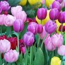 四川哪里赏花最合适?赏花好去处?
