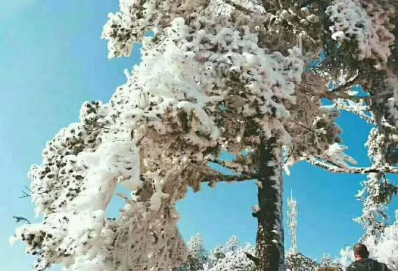 【南国雪乡*  西岭雪山休闲赏雪1日游】走进冰雪的世界   童话的王国