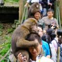峨眉山猴区注意事项
