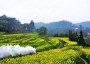 【犍为油菜花、沐川竹海、罗城古镇休闲2日游】欣赏犍为最漂亮的油菜花  感受春天般的温暖