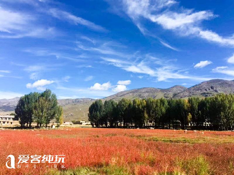 桑堆红草地 (3)