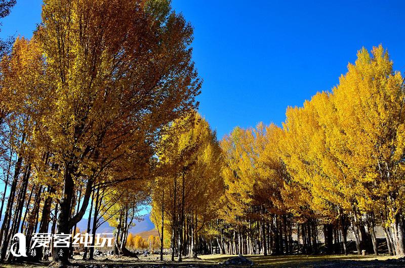 秋天的稻城