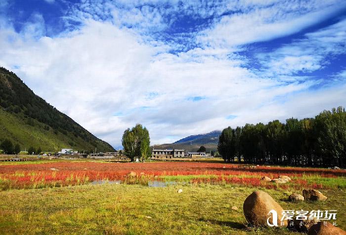 桑堆红草地几月最美