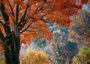 【孟屯河谷+米亚罗+奶子沟+七彩甲足+卡龙沟+羊茸哈德全景3日游】 穿越亚洲最大的红叶彩林区全境