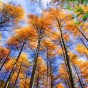 黑水奶子沟看彩林最佳时间