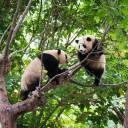 熊猫基地门票价格