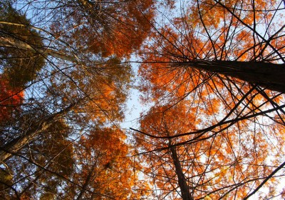 成都周边看红叶三日游去哪