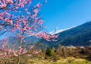 林芝桃花节什么时候开始?