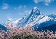 林芝桃花沟几月份最美,最佳时间是多久?