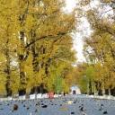 川西秋天最美的地方